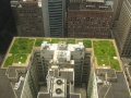 Chicago City Hall Green Roof.jpg